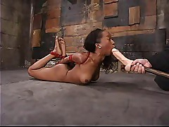 Stacey Cash Is Hogtied